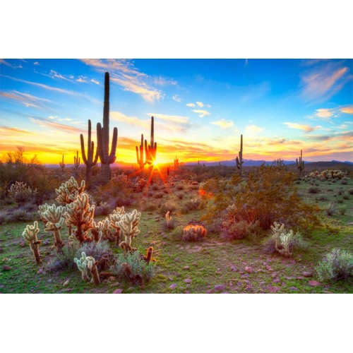 Sunset Desert Glass Wall Art