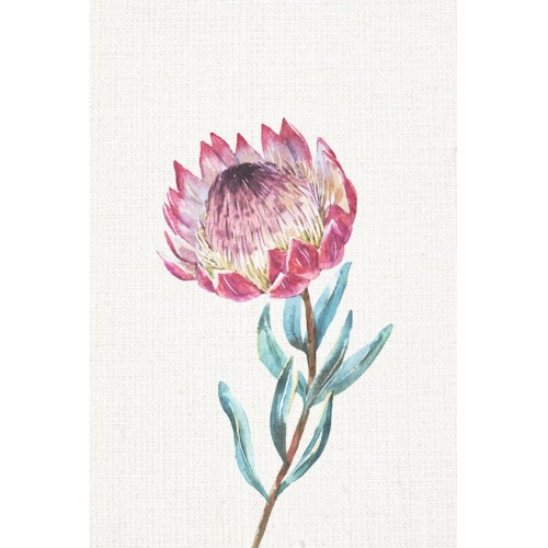 Waratah II Canvas Wall Art/Small