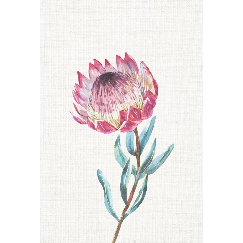 Waratah II Canvas Wall Art/Large