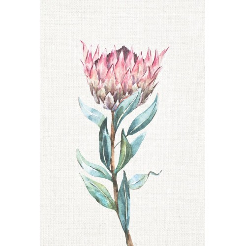 Waratah I Canvas Wall Art/Small