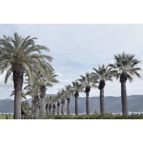 Street Of Palms Canvas Wall Art/Small
