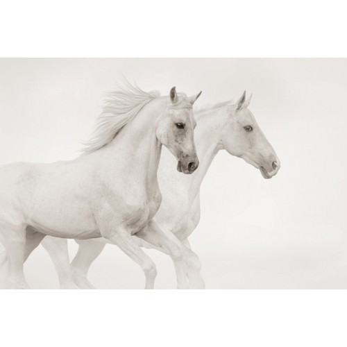 Stallion Canvas Wall Art/Large