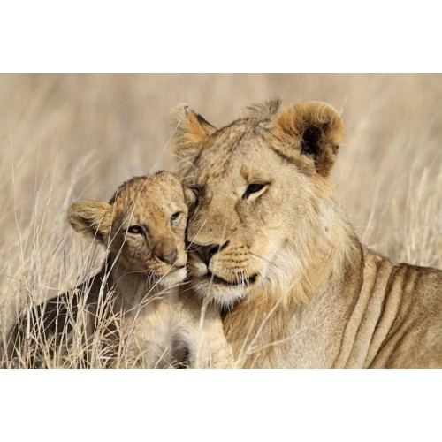 Serengeti Wild Canvas Wall Art/Large