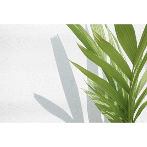 Light & Shade Canvas Wall Art/Small