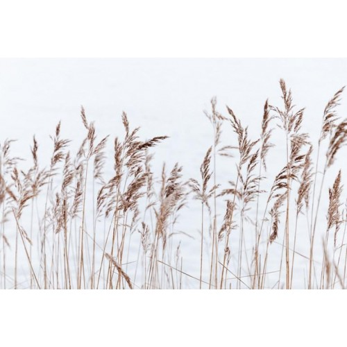 Grass Breeze Canvas Wall Art/Large