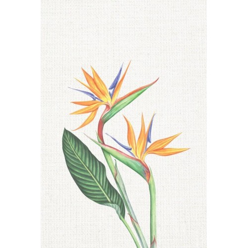 Floral Tropics II Canvas Wall Art/Small