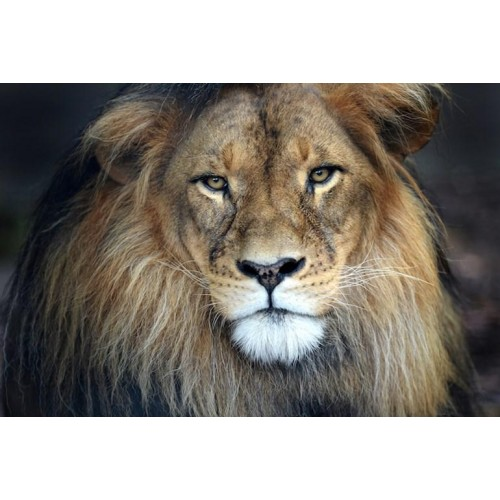 Cecil Beach Canvas Wall Art/Large