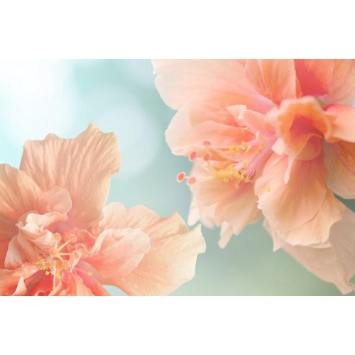 Hibiscus Canvas Wall Art/Large