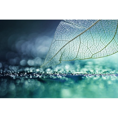 Macro Botanical II Glass Wall Art